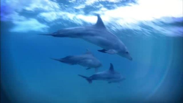 Delfine hautnah Video 3