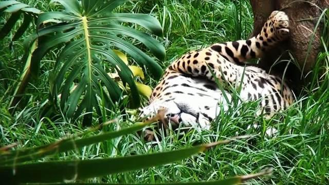 Faszination Regenwald - Südamerika - 3D Video 3