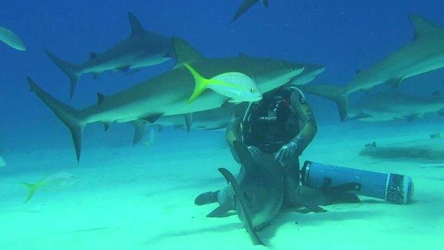 Abenteuer Karibik - Tauchen mit den Haien Video 2